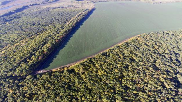 Русалка на ветвях сидит: Заповедные леса в России получат особый охранный статус