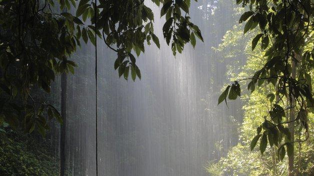 Ученые рассказали, когда умрут тропики Амазонки