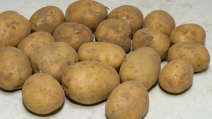 Картошка с молью: Россельхознадзор запретил ввоз 140 тонн корнеплодов из Египта