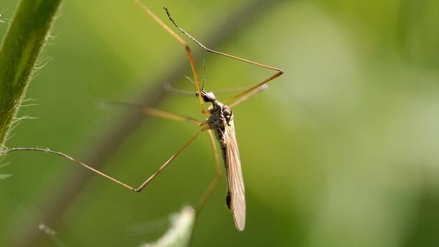 Комары-убийцы из Воронежа передали привет всей стране