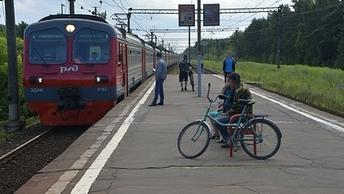 Сбитый поездом лось парализовал движение электричек в Тверской области