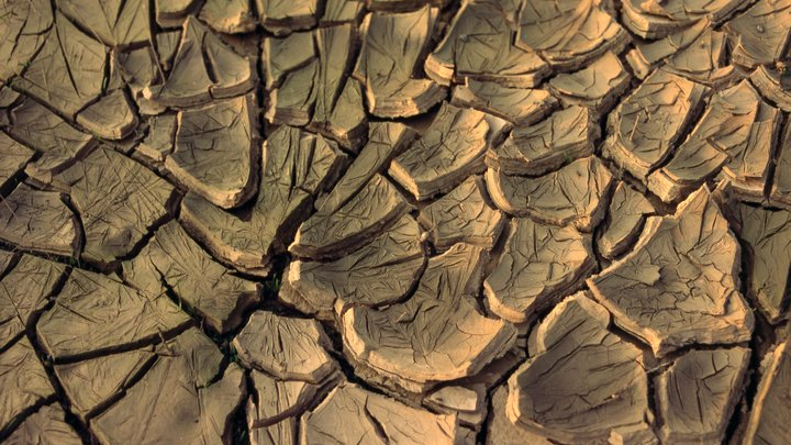 В Чувашии ввели режим ЧС: Аграрии потеряли урожай на 300 миллионов рублей