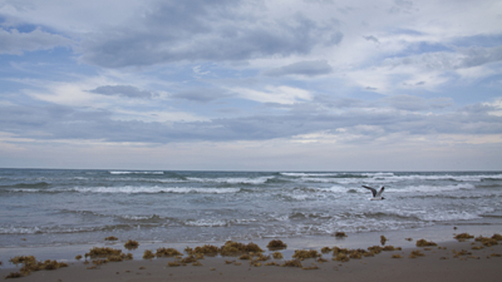 Океан на грани катастрофы: У берегов США обнаружили «мертвое пятно» размером с Черногорию