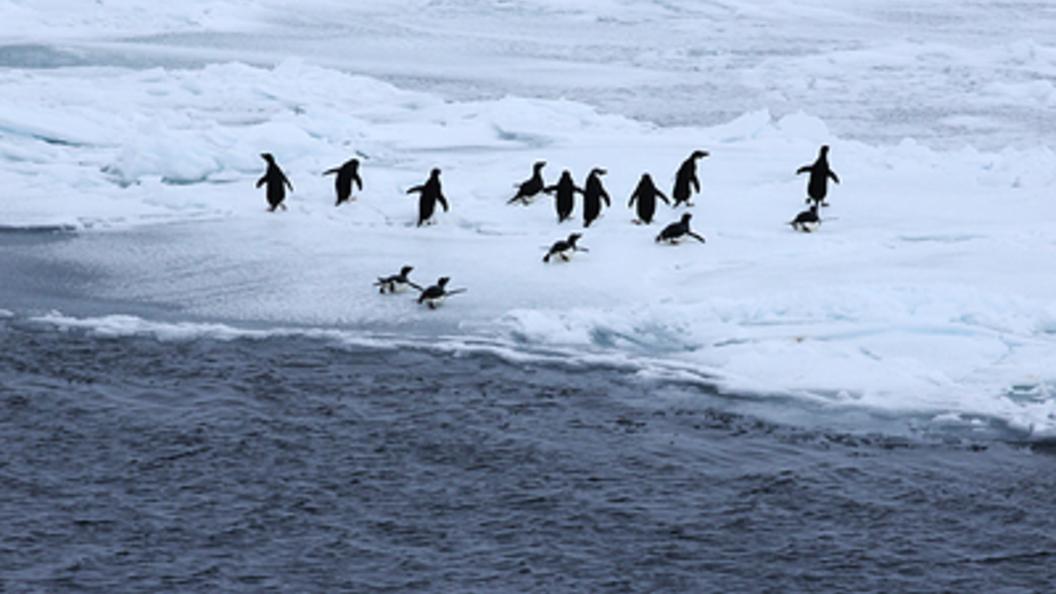 Антарктида стремительно «худеет»: Самый холодный континент Земли тает