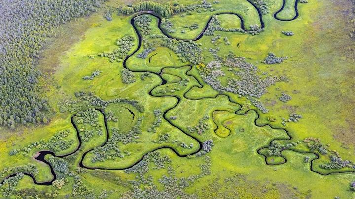 Сколько срубил - столько и посадил: Госдума обязала восстанавливать срубленные леса