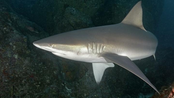 Няшное селфи модели: Акулы напали на девушку