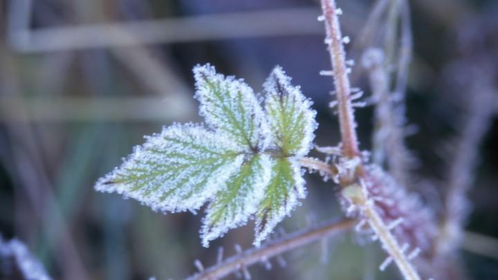 Синоптики предупредили о заморозках в августе