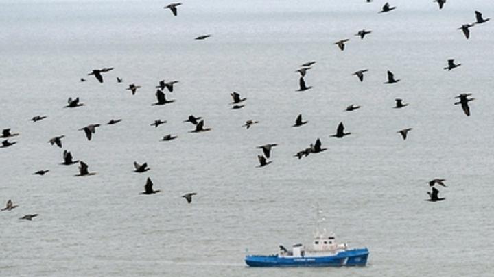 ВЯпонии возмутились присутствием южнокорейского судна около неоднозначных островов Такэсима