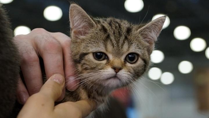 «Оголодала»: В Киеве прохожие спасли котенка от пытавшейся съесть его живьем женщины