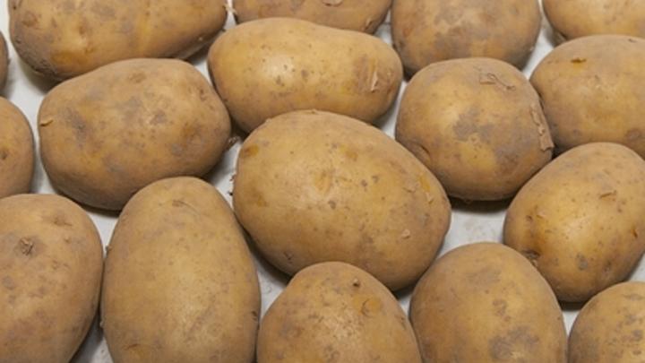 «Клубни целые и сухие»: Эксперты рассказали, как запастись на зиму хорошим картофелем