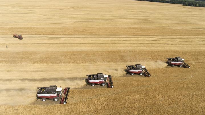 Пшеница раздора: США забили тревогу из-за российских фермеров
