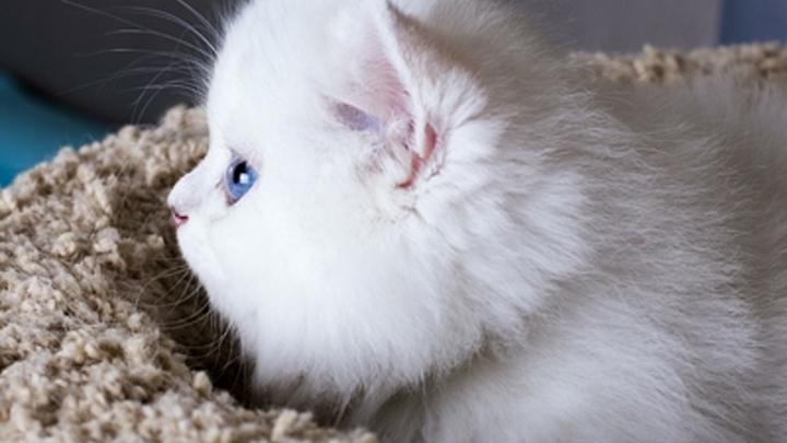 «Киберрука» из швабр помогла спасти от смерти котенка в Новосибирске - видео