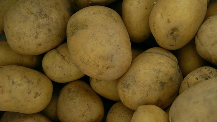 В Россию из Пакистана завезли картошку, вызывающую рак