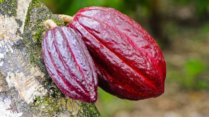 Еще один прекрасный повод обвинить Россию: Выяснилось, кто «съел» все какао в мире