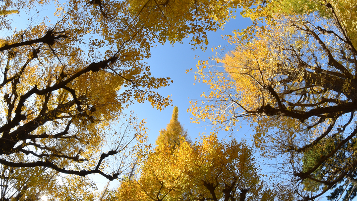 На смену «золоту» - дожди: Синоптики назвали дату окончания бабьего лета
