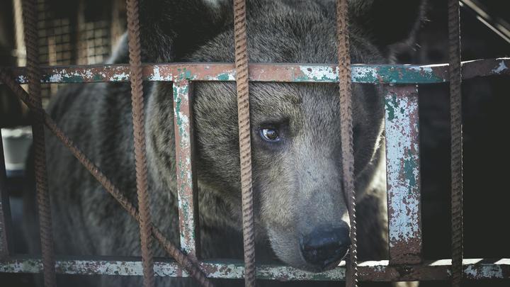 Прикажите немедленно спасти всех животных: Брижит Бардо обратилась к Порошенко