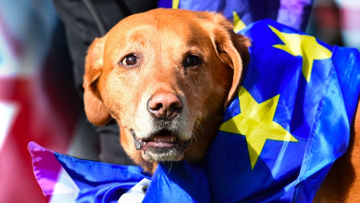 В Британии протестуют противBrexit. Собаки