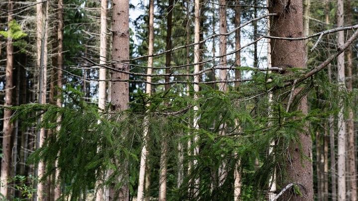 Оставленный матерью в зимнем лесу мальчик пойдет в приют из-за равнодушия родственников
