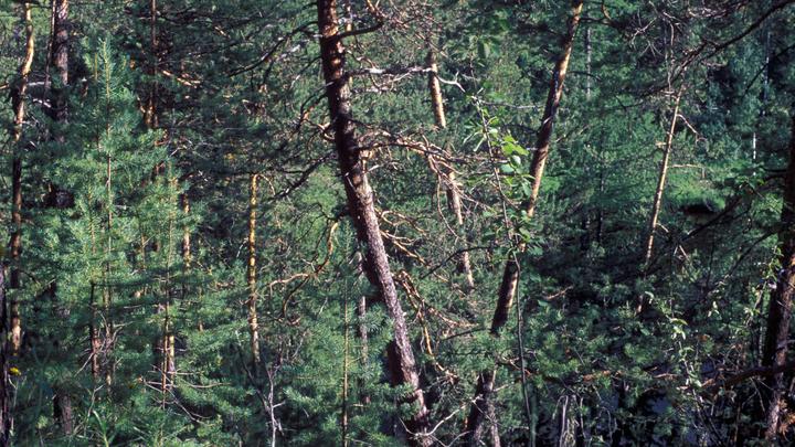 Как на фронте: Путин рассказал, как общественники спасают русские леса ценой своей жизни