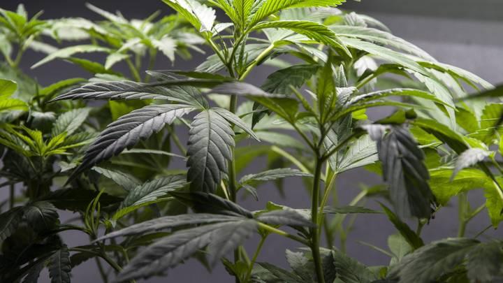 Депутаты Рады предложили легализовать наркотики по принципу Зеленского