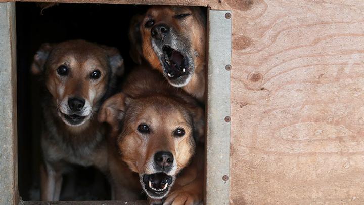 Как правильно уничтожать бродячих собак: Инструкция от зоозащитников