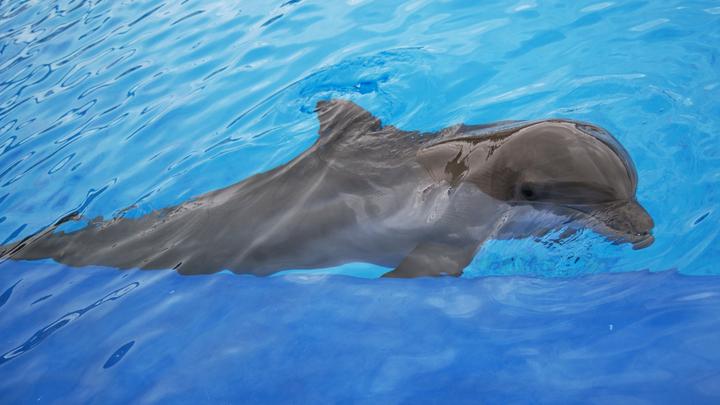 Черноморские дельфины сотнями выбрасываются на берег: Эксперты предупреждают о риске потерять краснокнижные виды