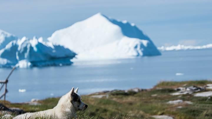 Футболка за 1000 долларов: В США начался сбор пожертвований на покупку Гренландии