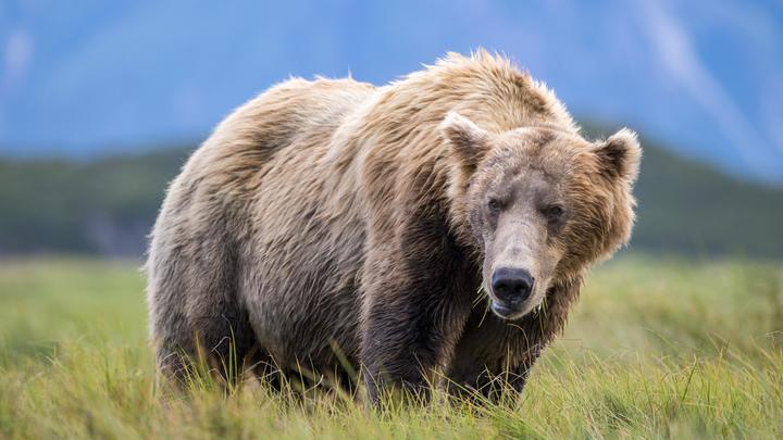 Медведь напал наженщину вМирнинском районе