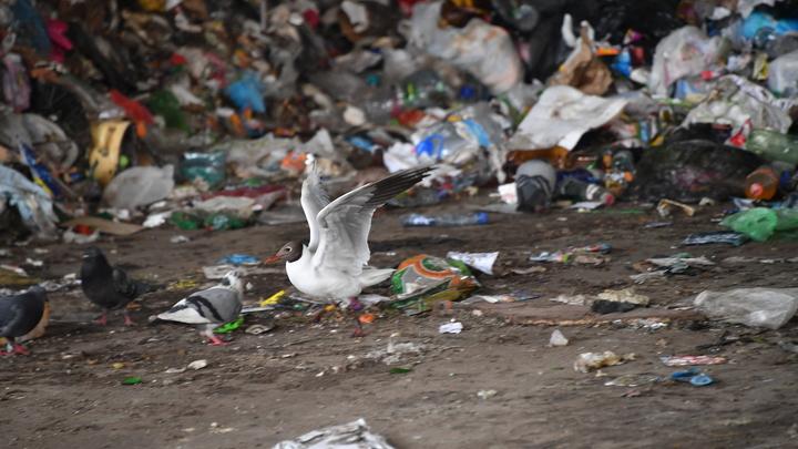 Спешка и отсутствие финансирования: Регионы не справились с разработкой схем по утилизации мусора