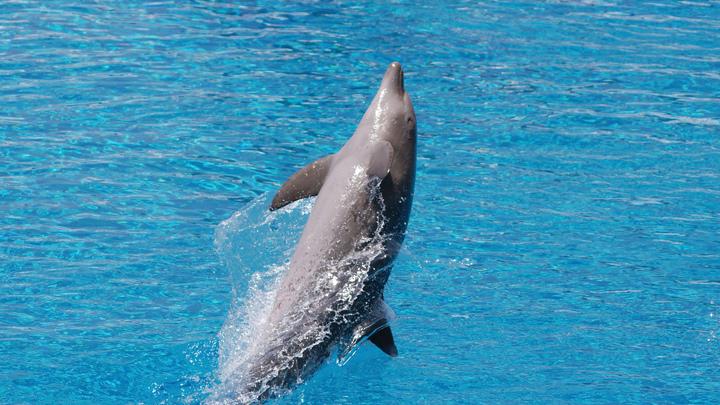Убили всю морскую жизнь в округе: Во время учений НАТО на минах подорвались дельфины - экологи нашли виновных