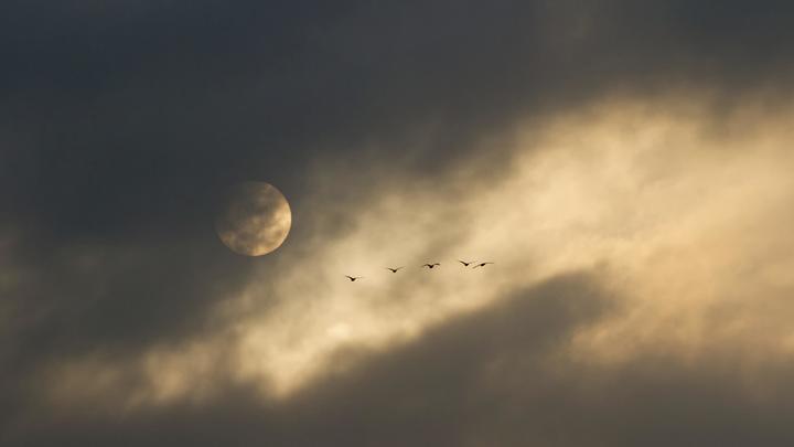 Так жён ещё не выбирали: Миллиардер из Японии объявил необычный конкурс-сватовство с полётом на Луну