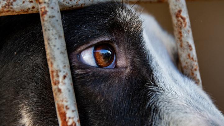 Не погибло ни одно животное: В Якутске опровергли сообщения о смерти собак в ледниковом концлагере