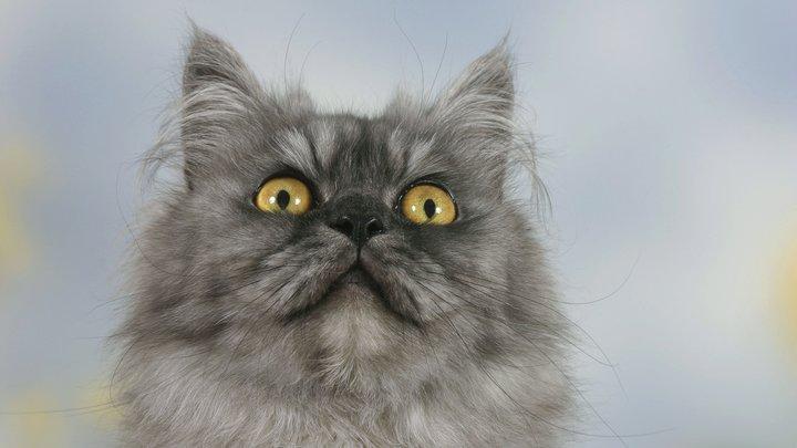Он там один, а вокруг - коронавирус: Российские чиновники помогли спасти котика из Китая