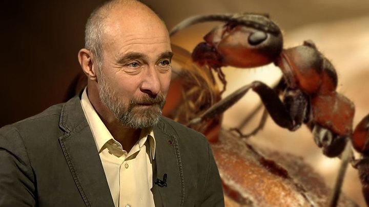 Пчелы-традиционалисты и муравьи-общественники