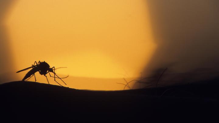 Подсмотрели у комаров: Учёные нашли способ научить дроны летать в темноте