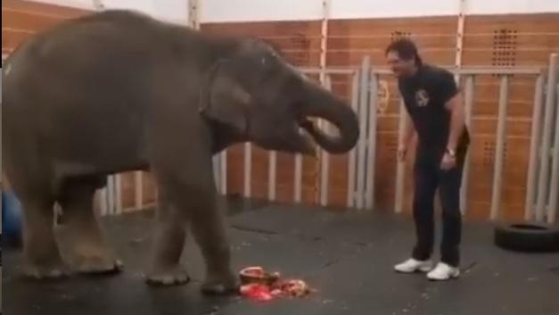 Эй, иди сюда: Запашный рассказал, как живётся маленькой слонихе из Ростова в московском цирке