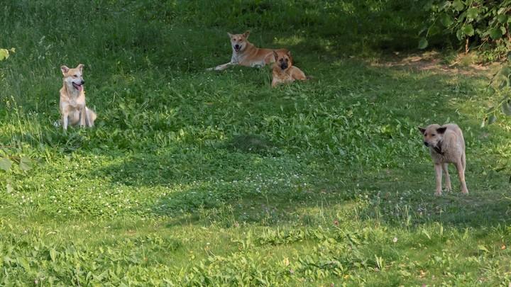 В Златоусте бродячая собака искусала шестилетнюю девочку