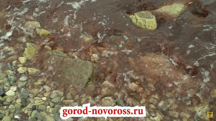 Не то кровь, не то вино: В районе Новороссийска море стало красного цвета
