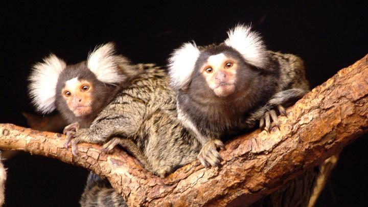 В Челябинске в зоопарке обезьян отправили на карантин