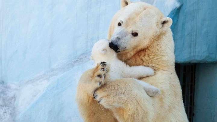 В зоопарке Новосибирска ответили губернатору на слова о проверке антиковидных мер