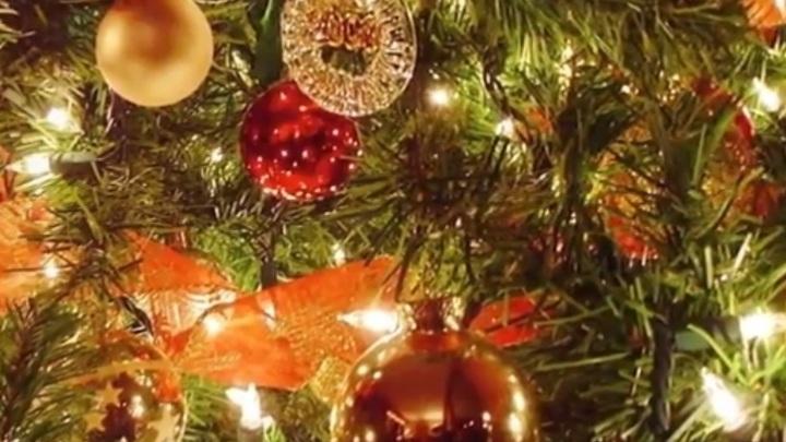 Увлажнитель воздуха и правильная упаковка: Как продлить жизнь новогодней ёлке