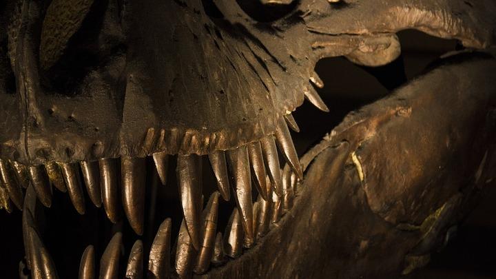 Ученые смогли получить образцы белковых клеток динозавров юрского периода