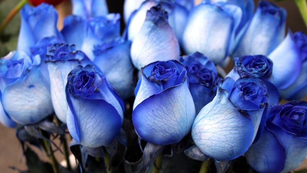 Русские журналисты подарили Ле Пен букет из синих роз