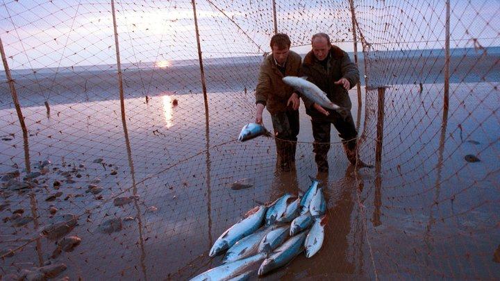 Употребление рыбы смягчает симптомы ревматоидного артрита