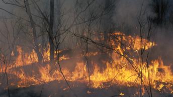 В США эвакуировали 1,5 тысячи человек из-за лесного пожара