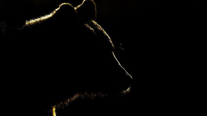 Тень медведя над планетой: хватит оправдываться