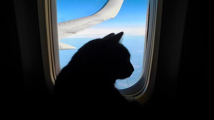 Хвостатый бро: Почему в России любят котов, а не людей и при чём тут «Аэрофлот»