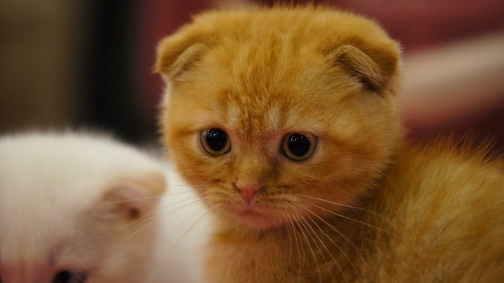 Мальчик на Алтае спас котенка и лишился обеих рук
