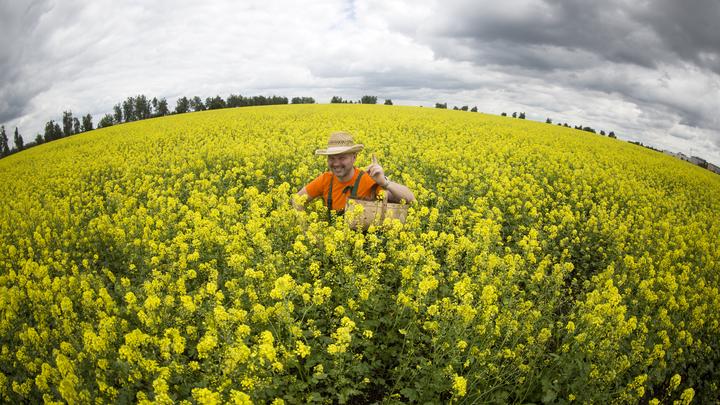Овощи без химикатов будут выращивать в России с помощью лазера