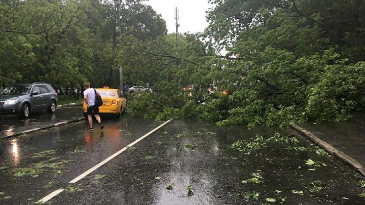 В Москве и Белгородской области объявили повышенный уровень опасности из-за грозы и ветра